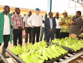 cameroon-the-eu-agrees-for-a-2-year-extension-of-its-banana-support-measures-bam