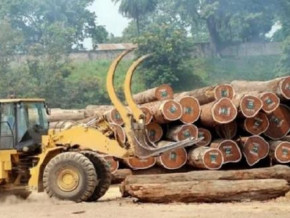 cameroon-exported-728-8-mln-m3-of-raw-timber-in-2019