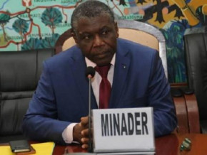 cameroon-government-will-distribute-1-4-mln-of-certified-cassava-cuttings-to-producers-this-year-minader
