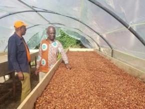 cocoa-purchase-price-rises-to-xaf1-050-despite-rainy-season