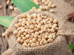 cameroon-yearly-soya-imports-estimated-at-xaf14-bln-soproicam