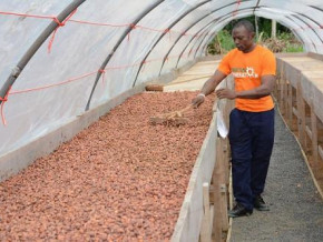cameroon-inaugurates-two-new-post-harvest-treatment-centres-of-excellence-in-the-central-region