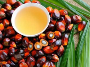 cdc-s-palm-oil-production-dropped-drastically-in-h1-2019